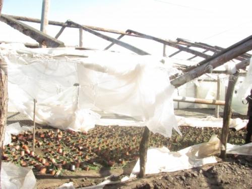 solarii matca  Pagube imense pentru legumicultorii din Matca