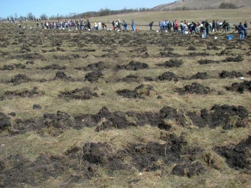 plantari  Instituţia Prefectului sprijină campania de împăduriri din judeţul Galaţi