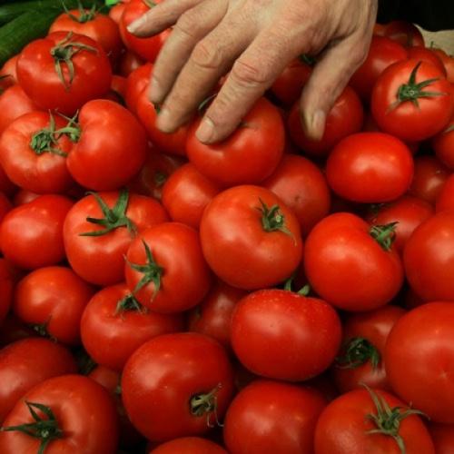 rosii matca  Producătorii din Matca vând roşiile cu 40 de bani per kilogram